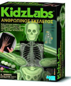 Κατασκευή Ανθρώπινος Σκελετός