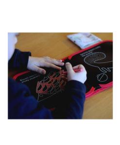 Βιβλίο ζωγραφικής κιμωλίες Ζωάκια